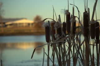 KAL-reeds