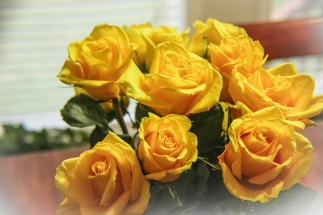 Yellow Roses -fb